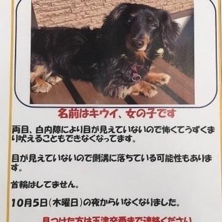迷い犬🐶ミニチュアダックス