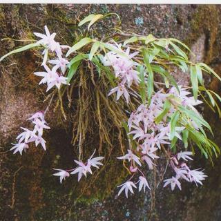 一般社団法人日本山野草ネットワークのNPO活動員募集