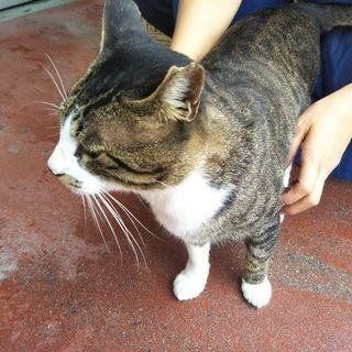 高蔵寺駅の近くの店の看板猫。