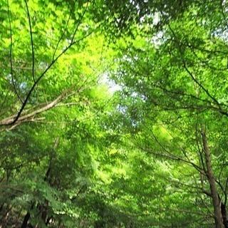 森林でヨガ マインドフルネスヨーガ