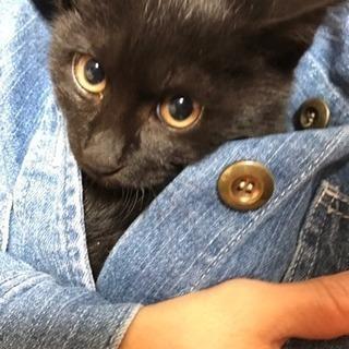 可愛い黒猫さん3ヶ月の女の子家族にして下さい