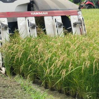 平成29年度茨城県産特別栽培米コシヒカリ30k