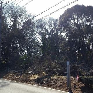 264坪の整形地 測量済み 公道面! 巨木が沢山ありツリーハウスや...