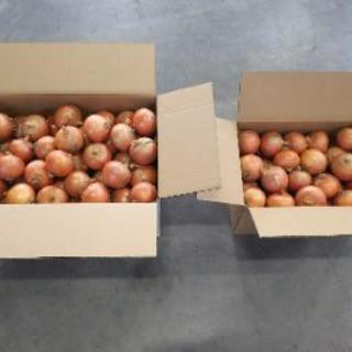 農家直送北海道長沼町産減農薬玉ねぎLサイズ20キロ