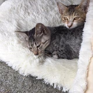 2匹の仔猫を保護、福島か東京近い方