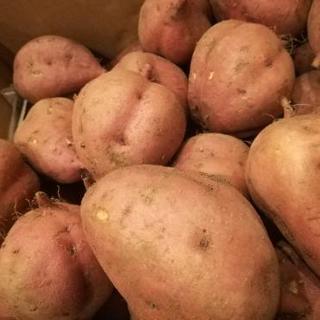 安納芋(種子島)
