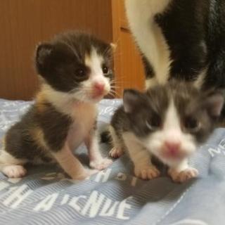 ☆子猫が5匹産まれました☆