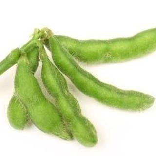 枝豆 大量5〜6㎏1000円✨こだわりの有機栽培