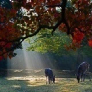 10/28開催 奈良公園周辺の神社巡りとさんぽ