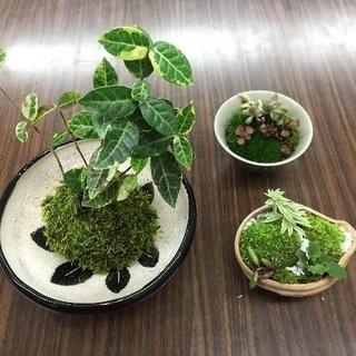 苔玉、ミニ盆栽3個セット