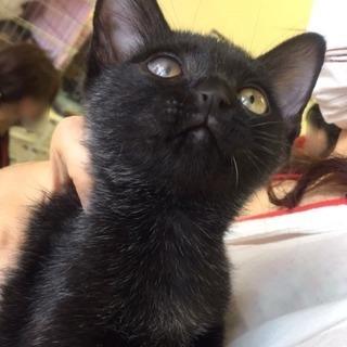 11月4日(土) 猫の譲渡会 名古屋市港区 中部盲導犬協会 みなと...