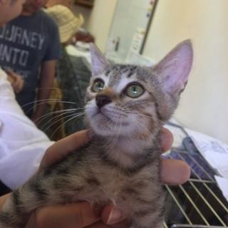 11月19日(日) 猫の譲渡会 名古屋市西区 ふれあい館 みなと猫...