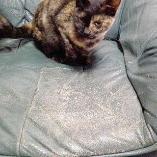 さび猫の迷い子猫