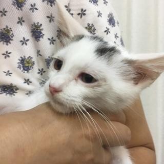 11月26日(日) 猫の譲渡会 名古屋市守山区 もりやま犬と猫の病...