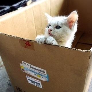 1ヶ月くらいの子猫の里親募集!