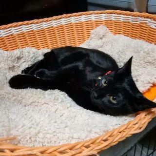 魔女宅ジジ似?美人黒猫♀