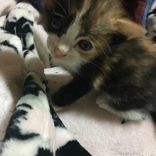 9月産まれの子猫