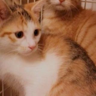 仲良し兄妹猫 2ヶ月半