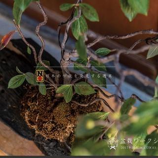 〜日本の伝統を発見する週末〜 盆栽ワークショップ