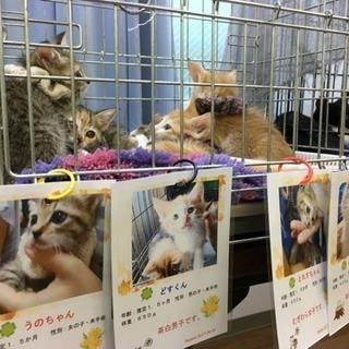 10/22(日)保護猫譲渡会 in 川崎