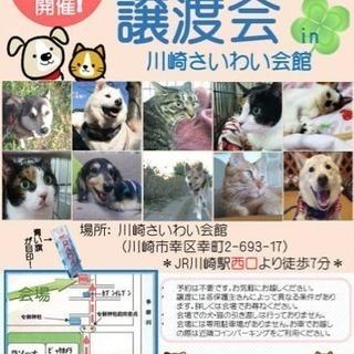 第4日曜日保護犬猫譲渡会