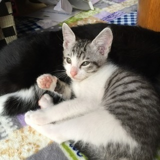 子猫オス2匹