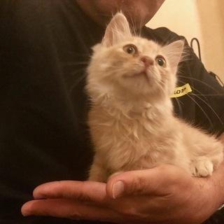 可愛い仔猫の、里親募集中。