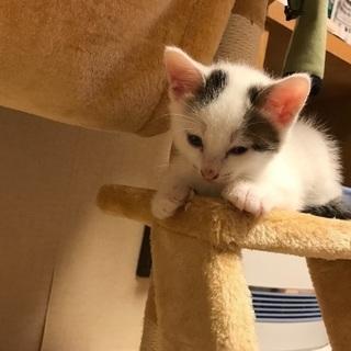 生後1カ月半の子猫
