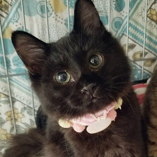 子グマ?いいえ、猫ちゃんです。