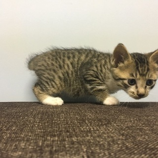 保護子猫4兄妹 生後1ヶ月くらい