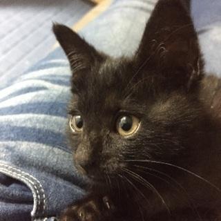 生後2-3ヶ月 オス猫