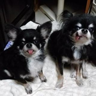 犬と旅行でオススメのコテージ等(関東圏)