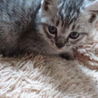 生後1ヶ月半程の子猫ちゃんたちです
