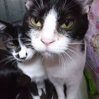 ☆猫、探しています❗