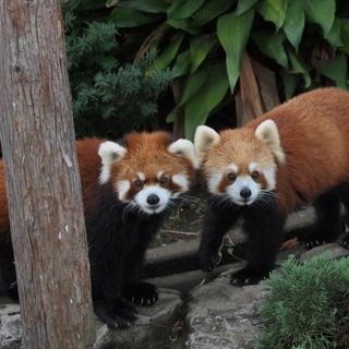 11月4日(11/4)  楽しい話題豊富!横浜の野毛山動物園を満喫...