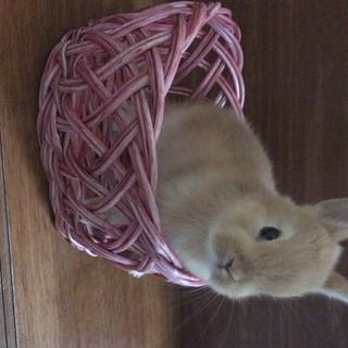 うさぎの赤ちゃん ♬ 里親募集