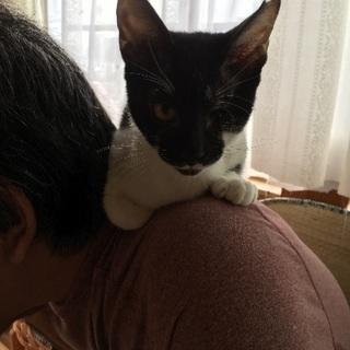 生後四ヶ月♂片目のジャック君今では肩乗りジャック君です。