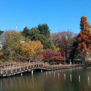 11月23日(11/23)  吉祥寺の井之頭公園で動物たちに癒され...