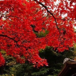 11月23日(11/23)  「紅葉が見ごろの日本庭園でウォーキン...