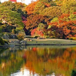 11月19日(11/19)  紅葉で有名な庭園で風情を楽しむ!六...