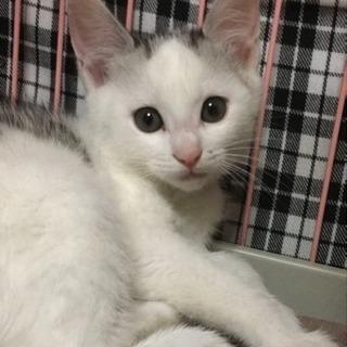 2ヶ月の子猫たちの里親さん探しています - 猫
