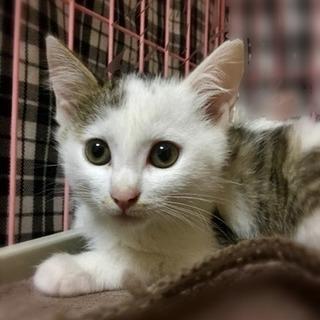 2ヶ月の子猫たちの里親さん探しています − 埼玉県