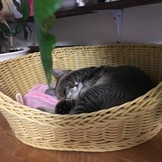 4〜5ヶ月の子猫ちゃん - 沼津市