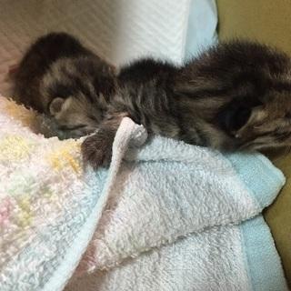 大至急!産まれたて赤ちゃん猫