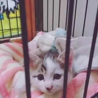 生後二ヶ月オスの子猫