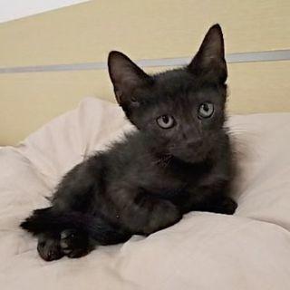 元気一杯黒猫くん