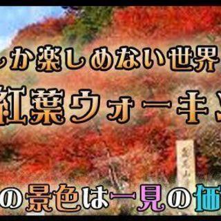 11月19日(11/19)  期間限定!最高のロケーション!山登り...