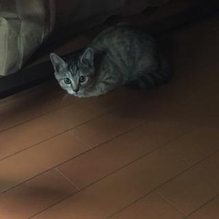 里親なってください可愛い1匹子猫です