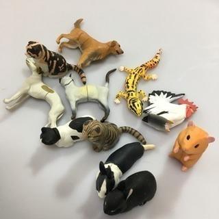 チョコエッグ♡ペット動物コレクション 11個 犬 猫 フィギュア