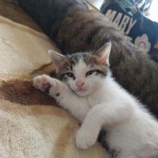 子猫の捜索 🐱 お願いします